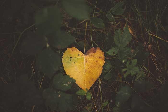 PENTECOST: LOVE